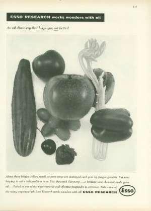 November 19, 1955 P. 146
