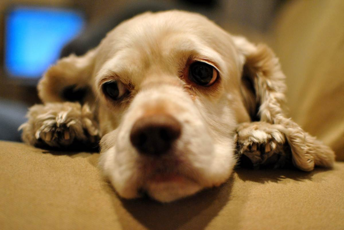 Paws and think how your dog is feeling